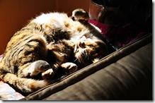 triki dorme4