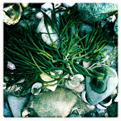 Seaweed at Silver Sands - Proof God is Creative!