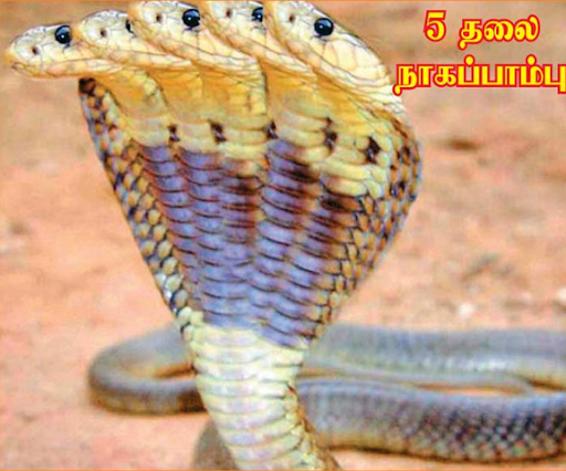 Malaimalar Tamil Newspaper Image Search Results