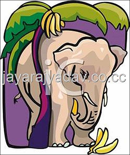 funny elephant banana