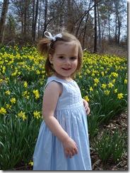Daffodil_0054
