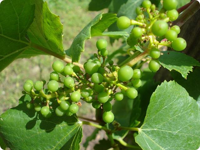 berry 019