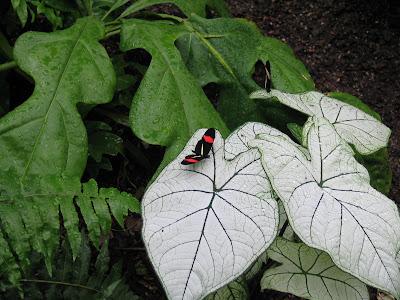 Meijer Gardens Butterfly Exhibit