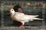 นกกับลิง