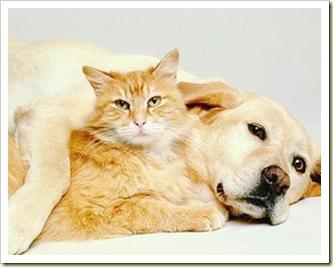 cane_e_gatto