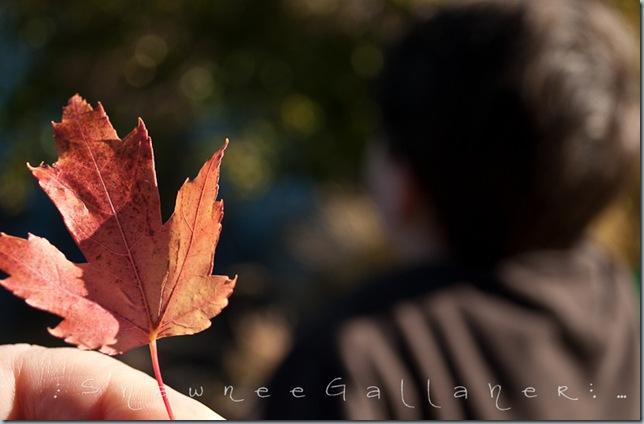 Bren.leaf