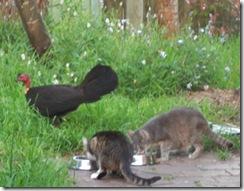 sybil, tabitha & turkey