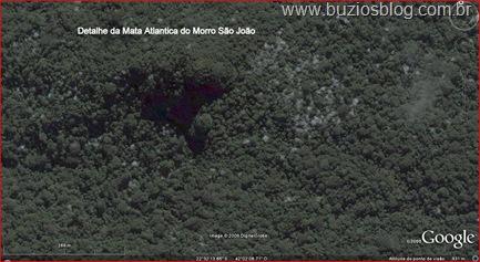 Detalhe da Mata Atlantica do Morro São João ( Vulção)
