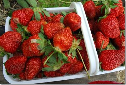 yummy strawberry goodness