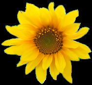 flower004