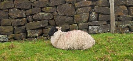 Hens, moors & Saltburn 028
