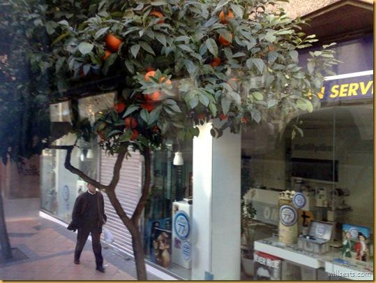 orange-16012009356