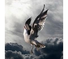 Artocard_Icarus