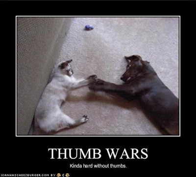 funny-pictures-cat-and-dog-have-thumb-wars-with-difficulty