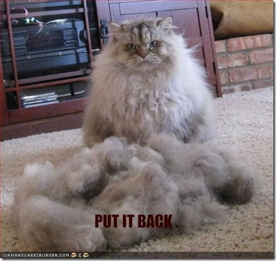 funny-pictures-shorn-cat-asks-for-his-fur-back