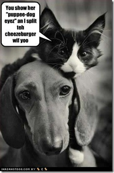 funny-dog-pictures-split-cheezeburger