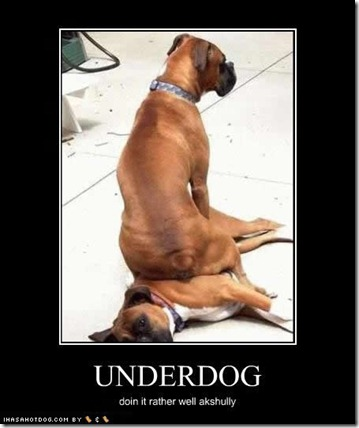 funny-dog-pictures-underdog-well