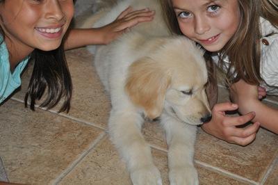 New Puppy 020