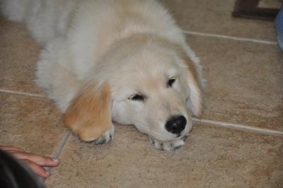 New Puppy 029