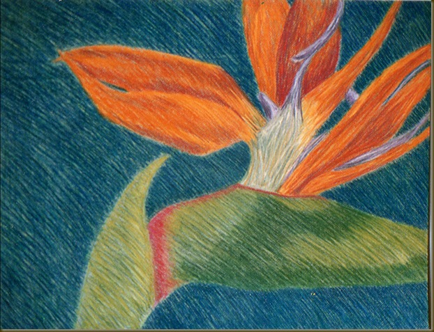 bird of paradise drawing two
