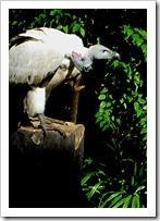 030 Vulture
