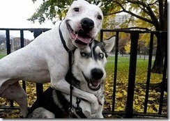 Funny-Animals-funny-animals-dog-friends-animals-mmmmm_large