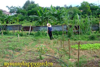 My Sunny Happy Garden: Bandar Harapan Organic Farm