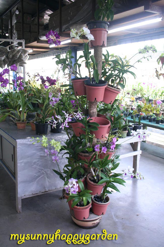 My Sunny Happy Garden Tips From United Malaysian Orchid