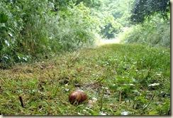 Escargot de Livry