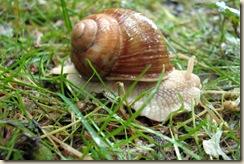 Escargot de Livry (2)