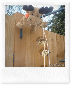 Hanging Pine Cone Feeders - 2