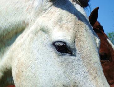 horses 030