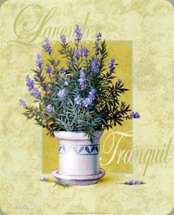 t-chiu-lavender