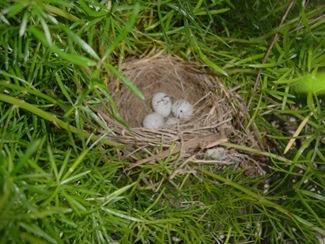 birds nest (6)