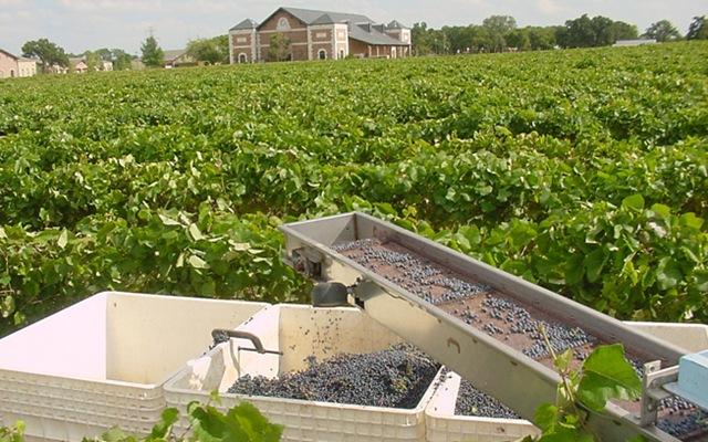 vineyard9