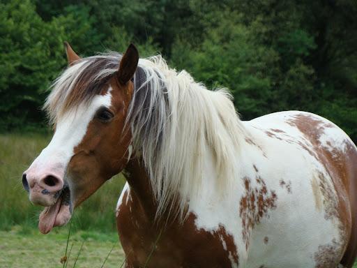 Vos plus belles grimaces de cheval et photos gag .... - Page 5 DSC06038