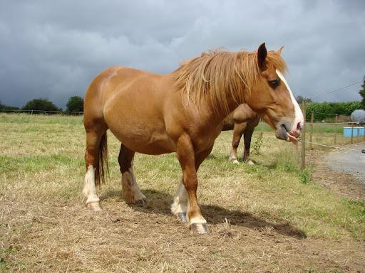 Vos plus belles grimaces de cheval et photos gag .... - Page 5 DSC05976
