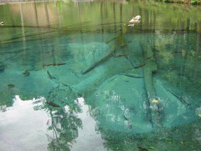 Ikan Naga dan Sumber Air