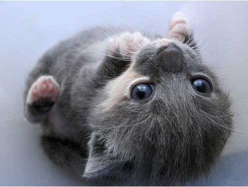 cute kitten lying upside down