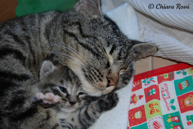 cute kitten cuddling with mother cat pic