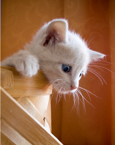 cute ginger kitten looking down
