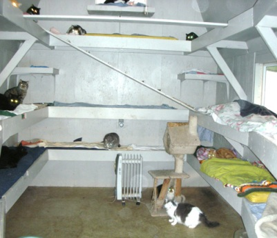 FIV room no cage adoption center cat house pic