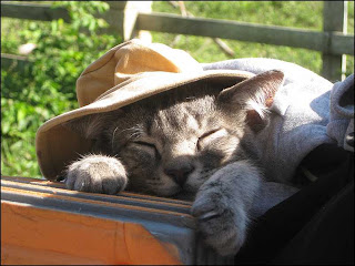 cute kitty backpacking kitten cat pic