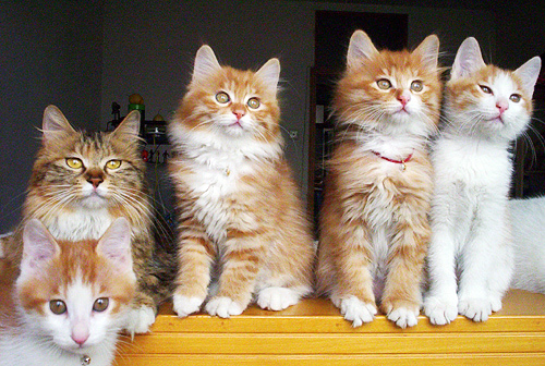 cute kittens fluffy cat pic