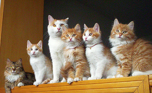 cute kittens family cats pic