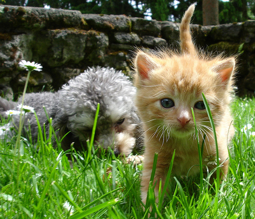 cute kitten puppy cat pic