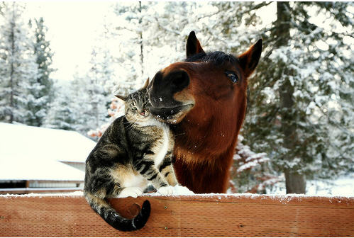 cute kitty and horse kissing cat pic