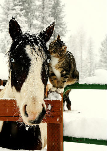 cute kitty kisses horse cat pic