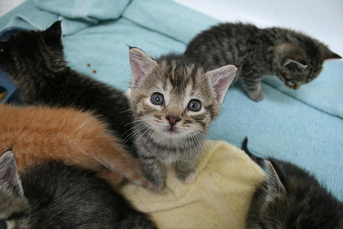 cute rescued kitten cat pic