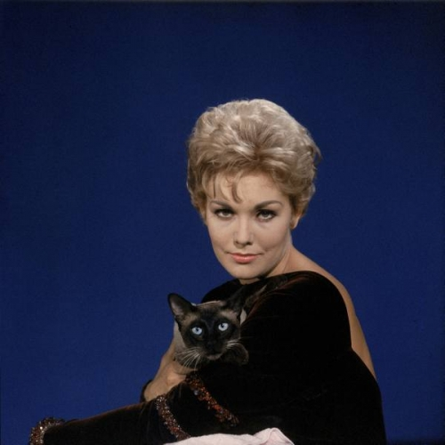 Kim Novak celebrity and cat